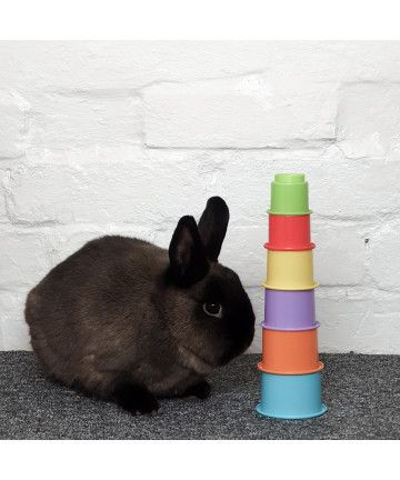 Enrichment  Small Stacking Cups (1.99) 2