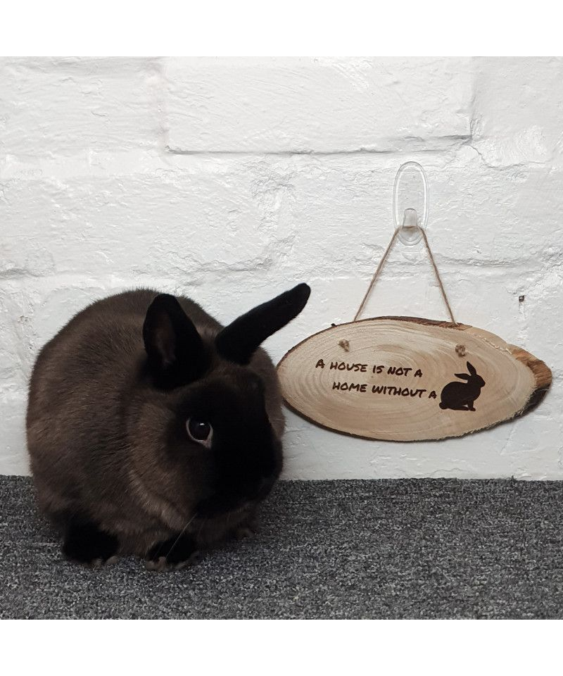 Housing  A House is not a Home without a Bunny - Wooden Plaque (9.99) 2