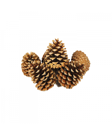 Pinecones - Pack of 5