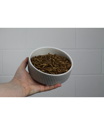 Dried Mealworms - 25g